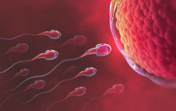 Phụ nữ bị rụng trứng vào khi nào? Thời kỳ rụng trứng kéo dài bao lâu?