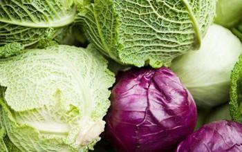 Công dụng của bắp cải trong chống lại bệnh ung thư