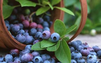 Tìm hiểu 7 thực phẩm tốt cho lá gan