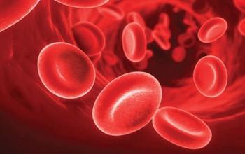 Dinh dưỡng cho bệnh nhân máu khó đông: Ăn gì và nên tránh gì?