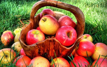 Người bị sốt nên ăn trái cây gì? 9 loại trái cây tốt nhất cho người bị sốt
