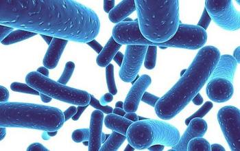 Lợi khuẩn là gì và những lợi ích với sức khỏe