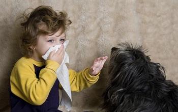 Dị ứng vật nuôi là bệnh gì? Biểu hiện và cách phòng tránh