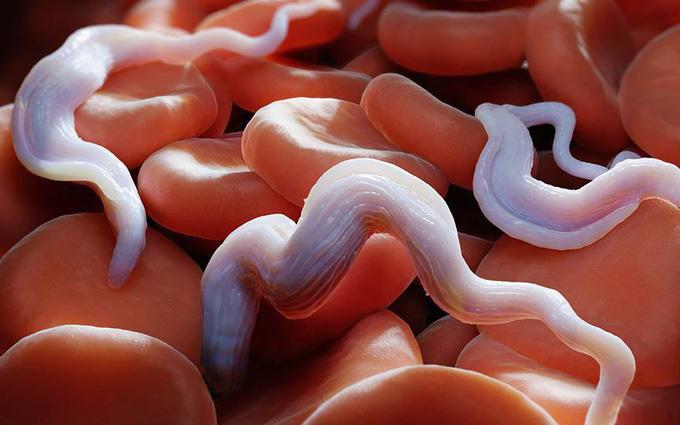 Các biện pháp phòng bệnh ký sinh trùng trên rau sống