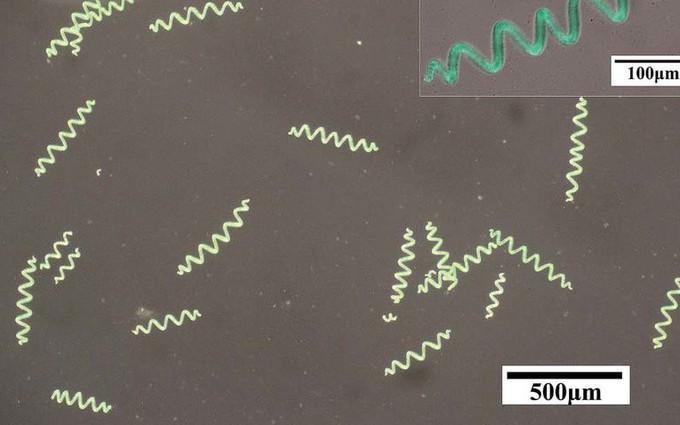 Chẩn đoán và điều trị ung thư bằng robot lai tảo siêu nhỏ