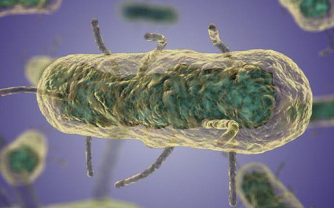 Nguyên nhân bệnh dịch hạch - nỗi ám ảnh của nhiều người