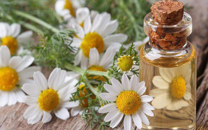 5 loại thảo dược giúp giảm cảm giác lo âu