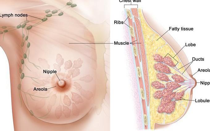 Nhiễm khuẩn núm vú và các bệnh lý nguy hiểm ở núm vú
